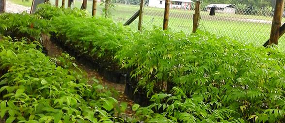 Proyecto de registro de iniciativas de manejo sostenible de la biodiversidad en la Amazonía ecuatoriana