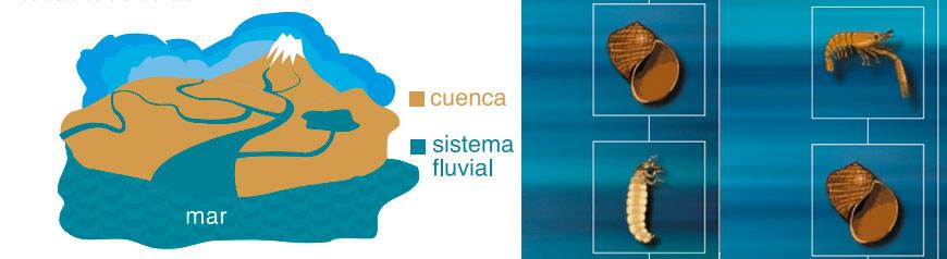 invertebrados-acuaticos01