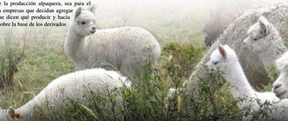 zuleta-nuevo-paraje-de-alpacas02
