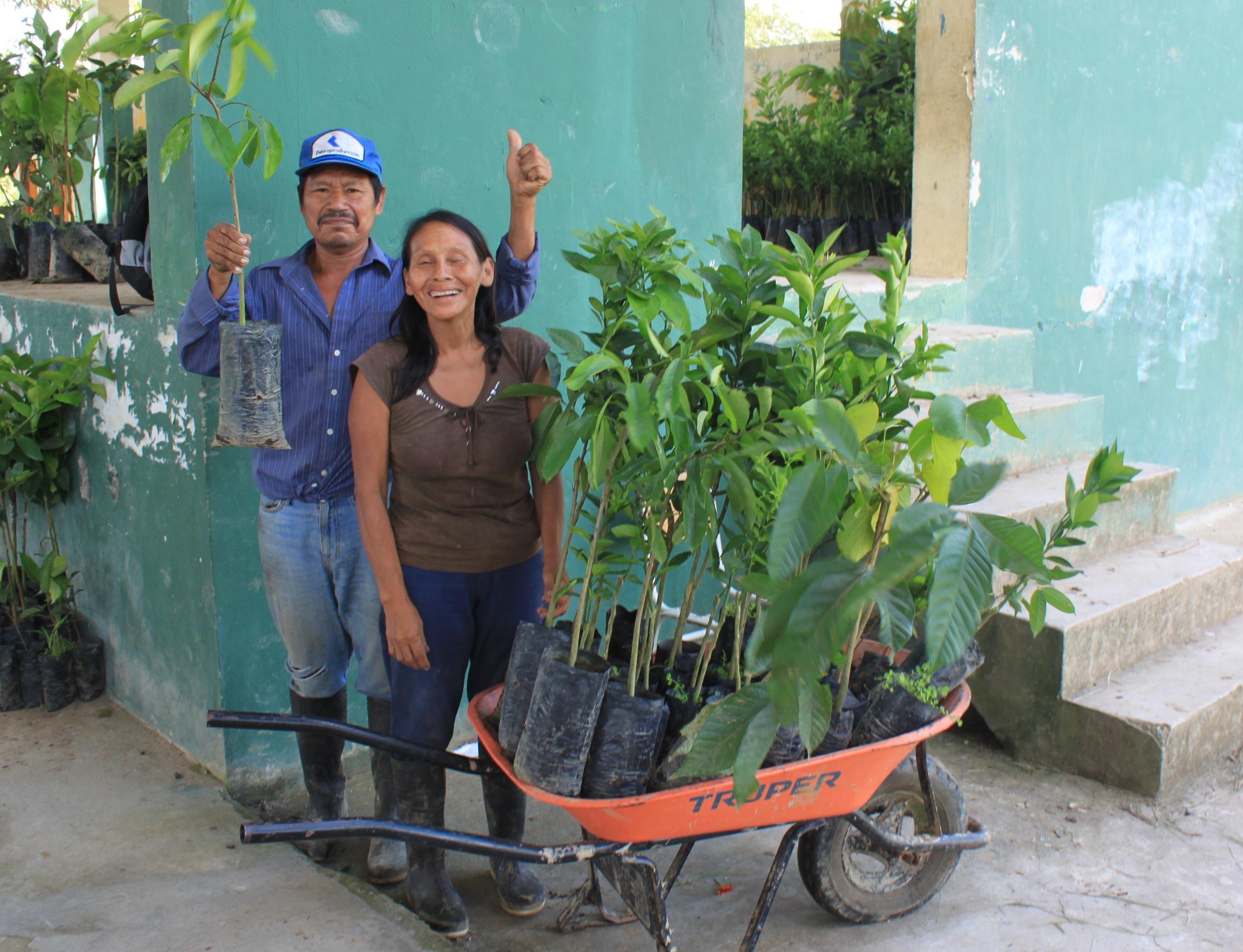 Plantas para la seguridad alimentaria y diversificación de chacras de cacao